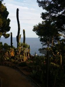 Cap Roig cacti